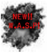 NEW! W.A.S.P!